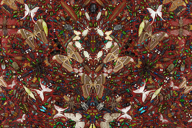 Damien Hirst to Collaborate with Alexander McQueen