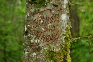 """Public Art Project """"Forest for the Trees"""" Launches in Portland, Oregon"""