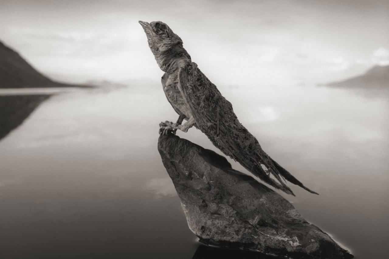 The Calcified Animals of Lake Natron, Tanzania