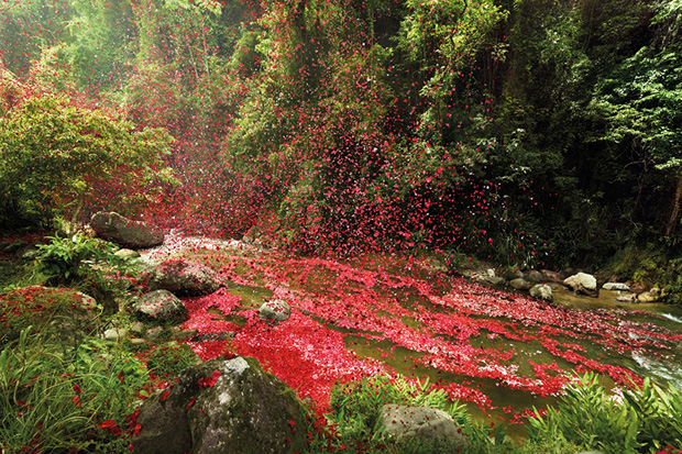 check out nick meeks photographs of costa rica covered in flowers for sony