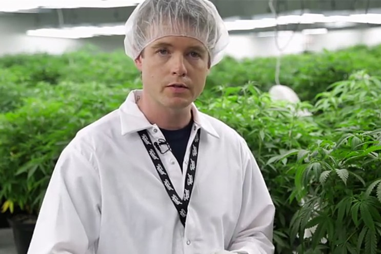 The New York Times Takes Us Inside the Tweed Cannabis Factory