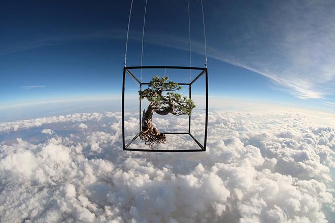 Azuma Makoto Sends Plants to Space
