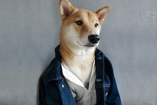 Menswear Dog is Pulling In $15,000 USD a Month