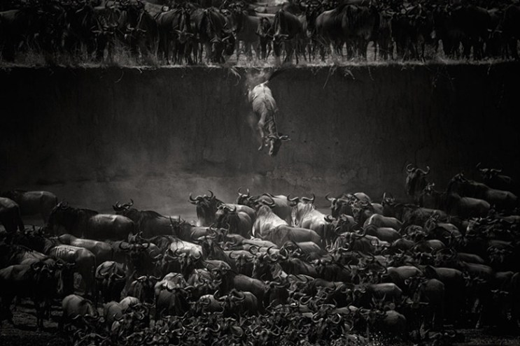 Winners of the 2014 National Geographic Photo Contest