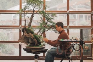The Delicate Art of Creating Bonsai Trees