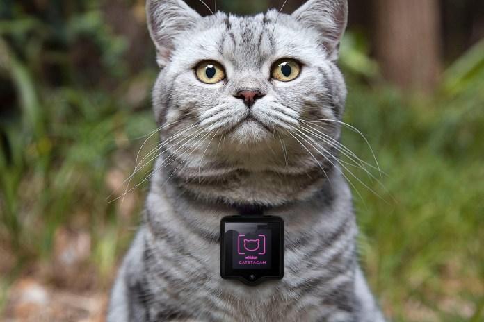 Catstacam Allows Your Cat to Take Instagram Photos