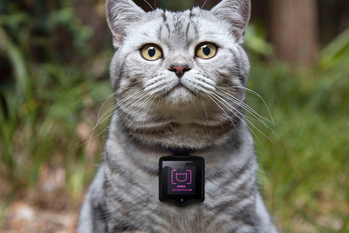 Catstacam Allows Your Cat to Take Instagram Photos