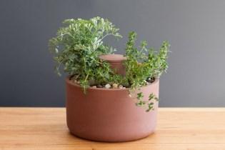 Joey Roth Self-Watering Ceramic Planters