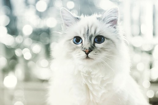 Karl Lagerfeld's Cat Made $4.25 Million USD Last Year