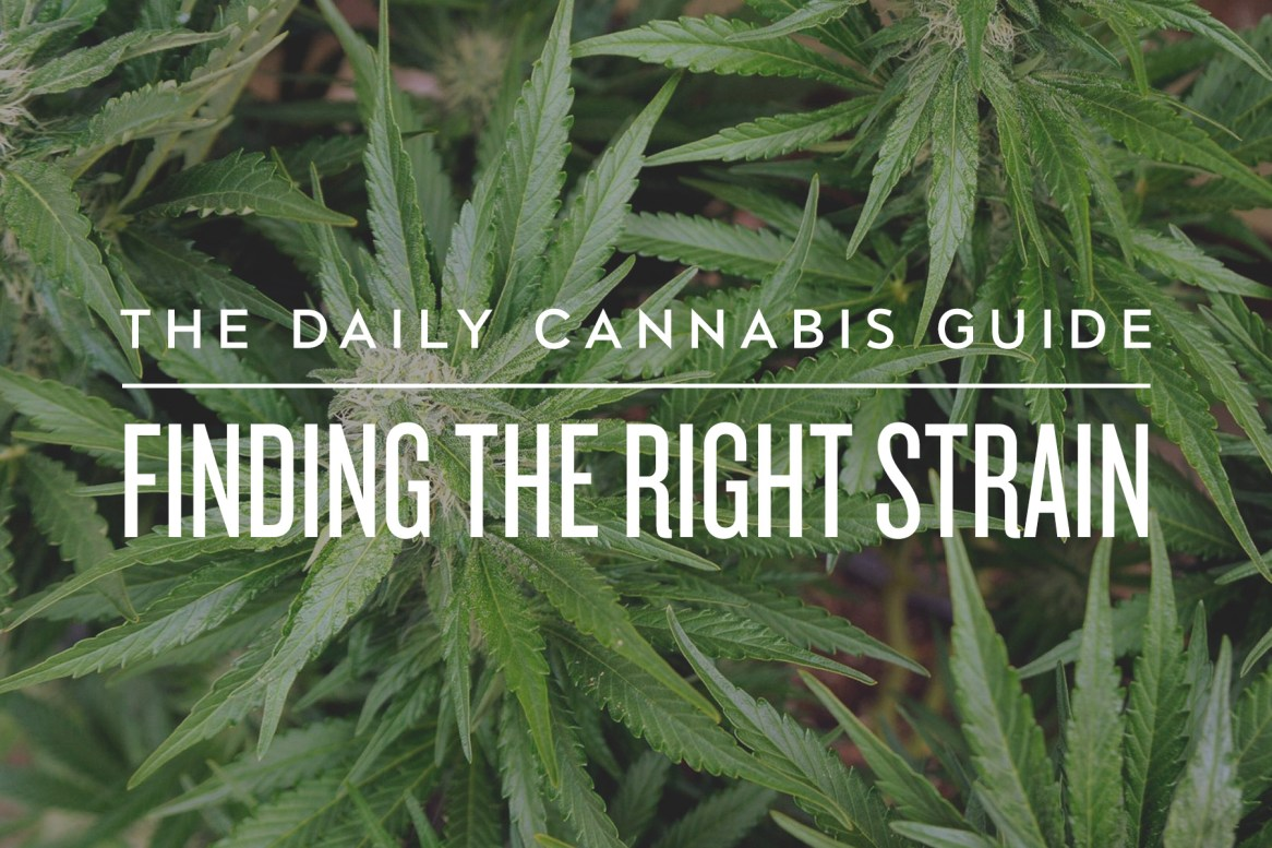 The Daily Cannabis Guide: Finding the Right Strain