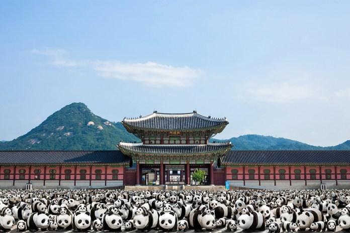 '1600 Pandas+' Makes Its Debut in South Korea