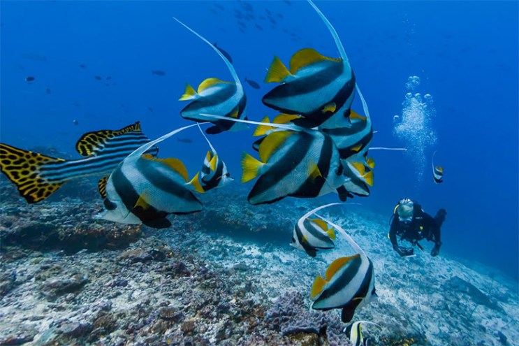 Google Street View Now Takes You Underwater