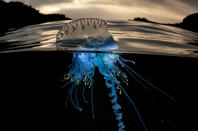 Rare Sea Creature Photography by Matty Smith