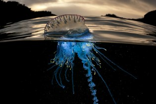 Rare Sea Creature Photography by Matty Smith