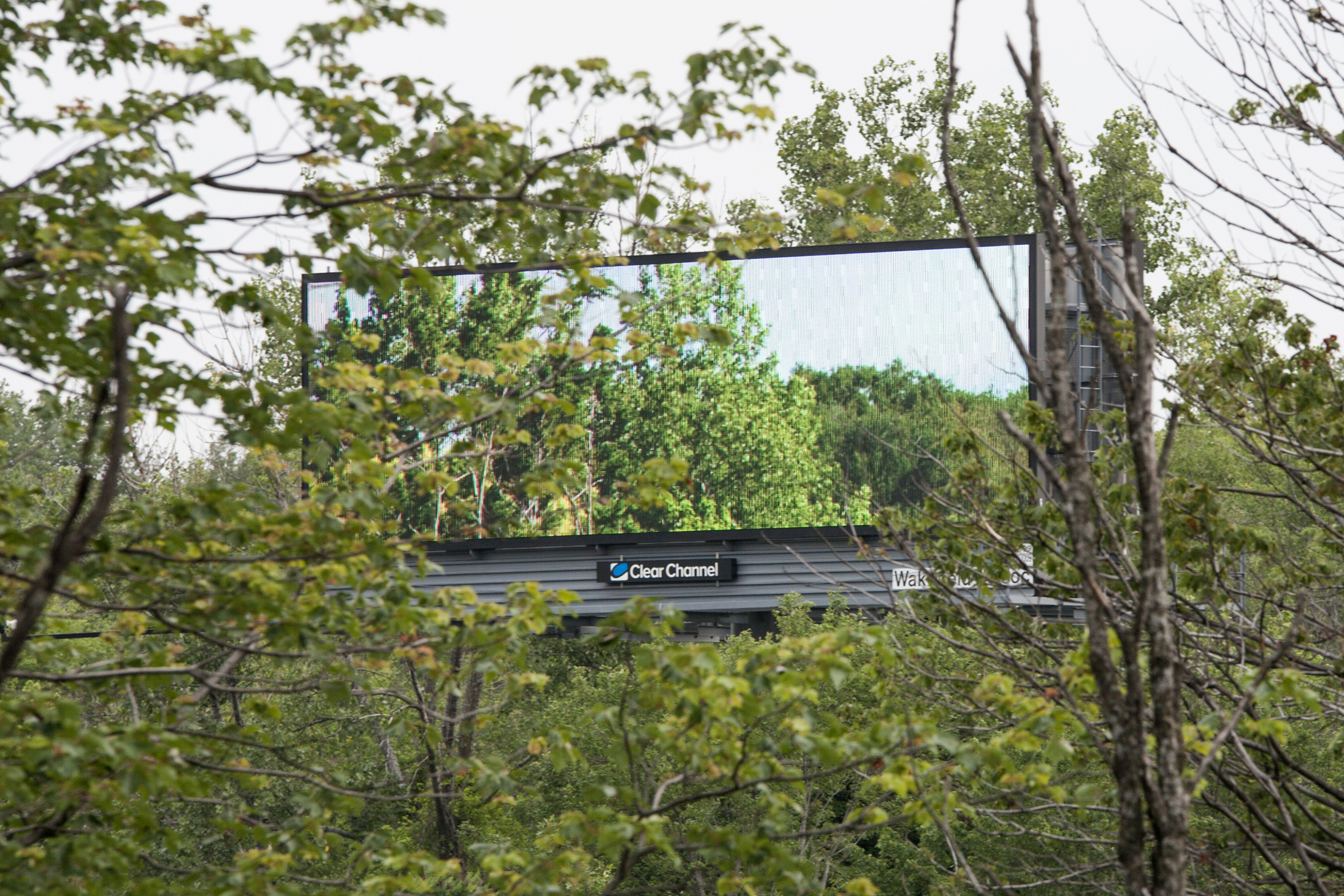 Artist Rents Roadside Billboards to Display Pictures of Nature