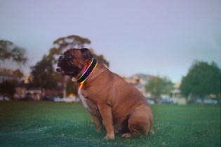 Buddy: The Activity Tracking, Geolocating, Next-Gen Collar for Your Pet