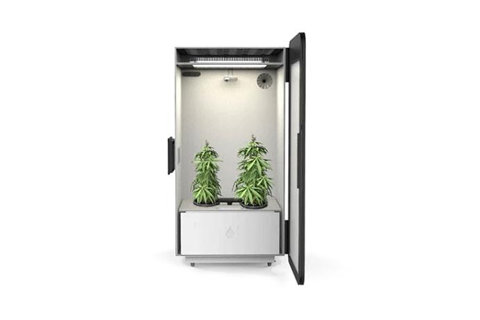 """Leaf """"Plug N Plant"""" Cannabis Home Growing System"""