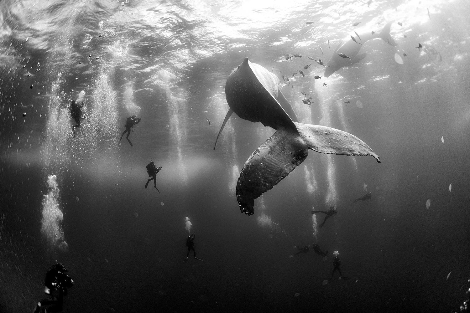 Here are the Winners of the 2016 World Press Photo Contest