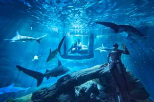 You Can Spend the Night in an Underwater Room Surrounded by Sharks