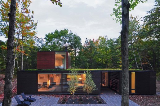 This House in the Woods Is Built to Resemble Tree Bark
