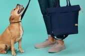 Whistles and Buddy Drop a Capsule Collection With Man's Best Friend in Mind