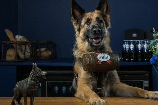 Dogs Will Serve You Beer at This London Pop-Up Bar