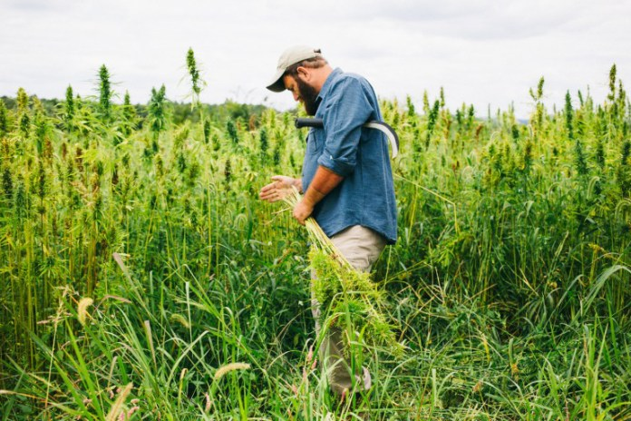 Patagonia Makes a Strong Case for Legalizing Industrial Hemp Cultivation With 'Harvesting Liberty' Documentary