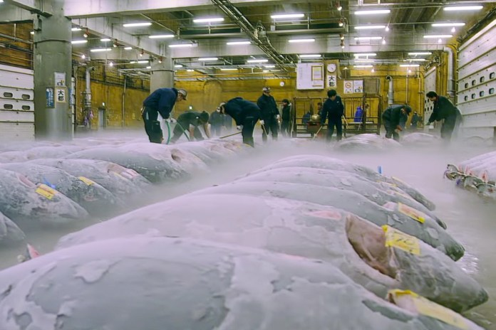 'Tsukiji Wonderland' Trailer Documents the Happenings at the World's Most Famous Fish Market