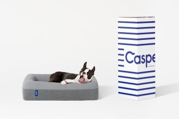 Casper Is Now Making Memory Foam Mattresses for Dogs