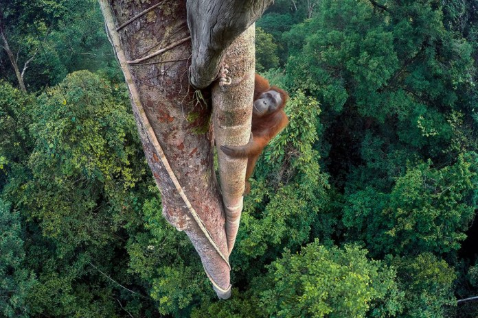 Stunning Images From the 2016 Wildlife Photographer of the Year Awards