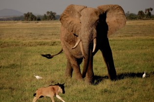Discover the Crime-Ridden World of Ivory Trafficking in 'The Ivory Game'