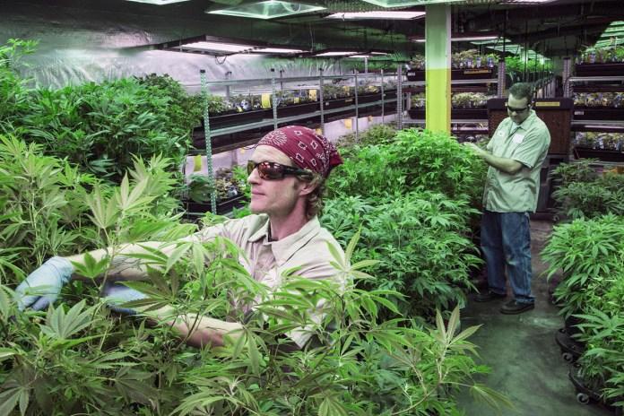 Marijuana Sales Topped $6.7 Billion USD in 2016