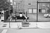 Santa Cruz Drops New 13-Minute Skate Video Shredding Through Midwest America