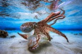 Check out the Stunning Winning Entries From the Underwater Photographer of the Year Competition