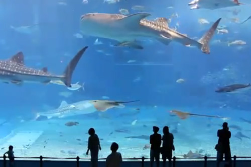 N.E.R.D. - Life As A Fish