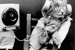 Listen to Music That Scientists Had Created Specifically For Cats