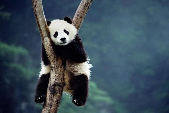 "Lil' Kim Remixes Desiigner's ""Panda"""