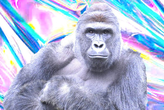 A Harambe Hologram Will Appear at Day For Night Festival