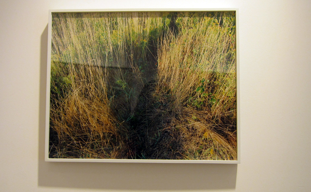 Photograph by Katherine Wolkoff at Sasha Wolf Gallery
