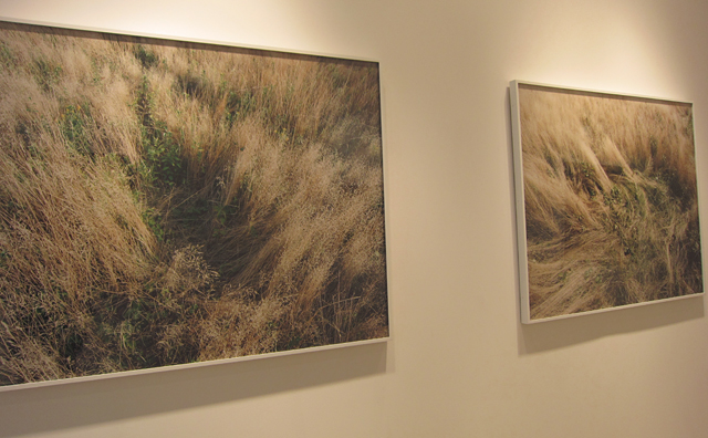 Photographs by Katherine Wolkoff at Sasha Wolf Gallery