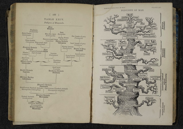 The Pedigree of Man. Ernst Haeckel, The evolution of man. London, 1879.   Download file( .JPG, 431KB ) Ernst Haeckel was inspired by the ideas of Charles Darwin and sought to devise trees organising all life on Earth.
