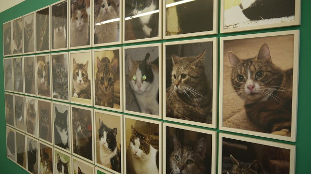 """Anna Jermolaewa, installation view of """"Untitled (Hermitage Cats)"""" (2013)"""