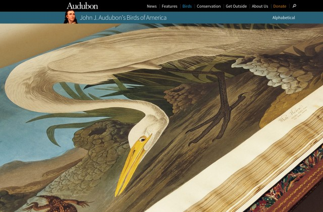 The Audubon Society's portal for 'Birds of America' (screenshot by the author for Hyperallergic)
