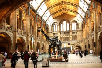 Dippy in the main hall of the Natural History Museum (photograph by Allan Henderson, via Flickr)