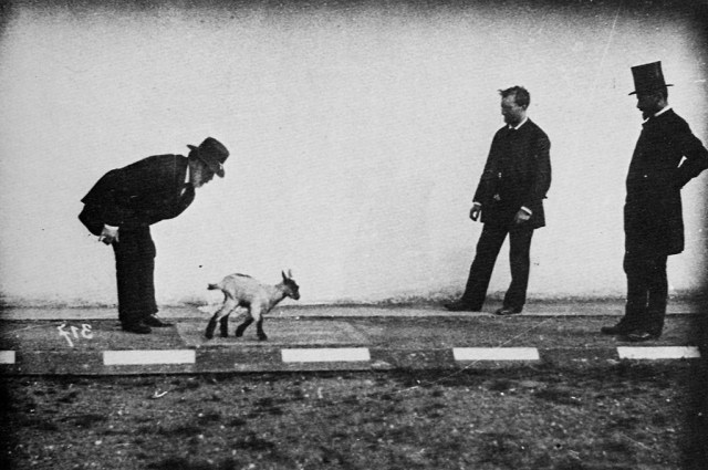 Étienne-Jules Marey at left with Georges Demenÿ at right with a kid goat in a physiological study (pre-1904) (via Wikimedia)