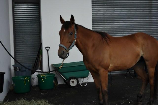 "Jannis Kounellis's ""Untitled (12 Horses)"" at Gavin Brown's enterprise"