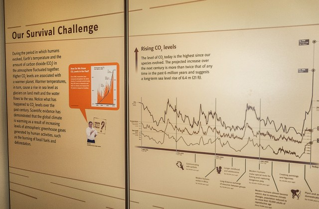 A display inside the Hall of Human Origins at the Smithsonian National Museum of Natural History