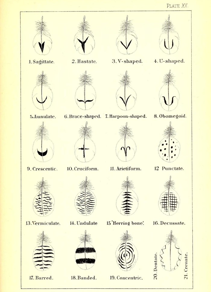Feather diagrams from the 1886 'A nomenclature of colors for naturalists : and compendium of useful knowledge for ornithologists' by Robert Ridgway (via Smithsonian Libraries)