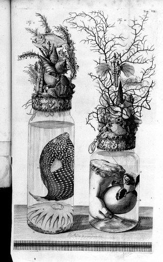 Engraving from Frederik Ruysch's 'Thesaurus Anatomicus,' showing sea creatures with a severed human hand and turtle (via Wellcome Images/Wikimedia)