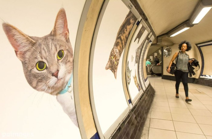 Citizens Advertising Takeover Service (aka CATS) paid for a bizarre ad takeover in the London Tube. Sure, it's adorable but definitely odd. It was funded by ~700 people on Kickstarter. (via Bored Panda)